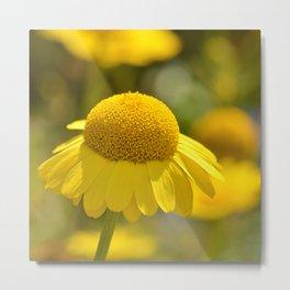 Yellow flower macro 253 Metal Print