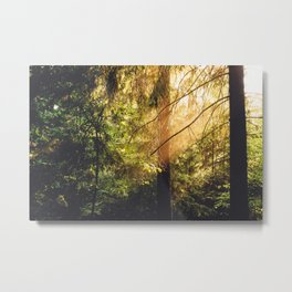 Forest Trees Nature Metal Print