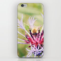 Spring Time Bumble Bee on a Purple Flower iPhone & iPod Skin