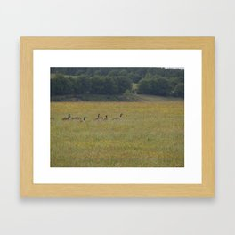 Canadian Geese in an English Meadow Framed Art Print