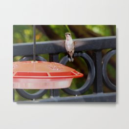 Grammy's Hummingbird Metal Print