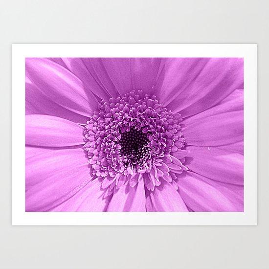 Lilac Gerbera Art Print