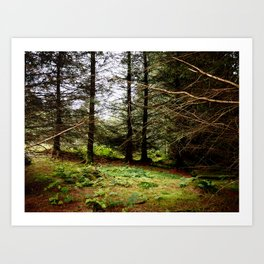 Woodland Copse Art Print