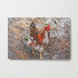 Curious Hen Metal Print