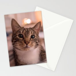 A relaxing kitty / kitten Stationery Cards