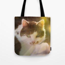 Beautiful cat in autumn sunlight Tote Bag