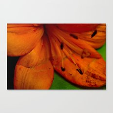 Perfect Imperfections Canvas Print
