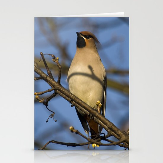 Waxwing posing Stationery Cards