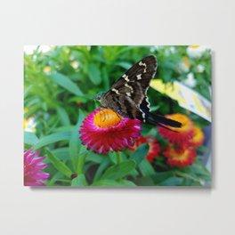 Hummingbird Moth on Flower Metal Print