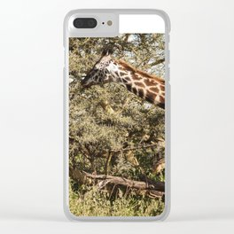 African Giraffe Snacking - Serengeti Tanzania 5068 Clear iPhone Case