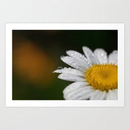 Raindrops and Daisy Art Print