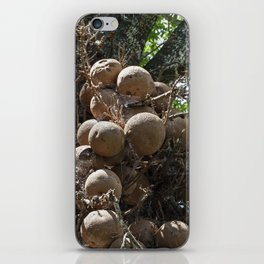 Cannonball Tree Fruit iPhone Skin