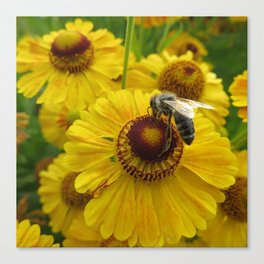 Bee and Gold Canvas Print