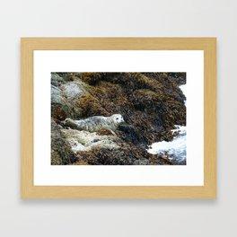 Alaskan Seal Framed Art Print