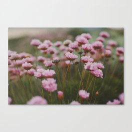 Pale Pink Canvas Print