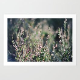 Heather Fields - Nydoa Photography Art Print