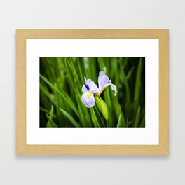 Blue Flag Iris Framed Art Print