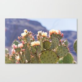 Prickly Pear Cactus Blooms, II Canvas Print