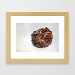 Physalis Part VII. Framed Art Print