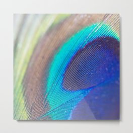 Peacock feather macro Metal Print