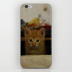 love cat photography iPhone & iPod Skin