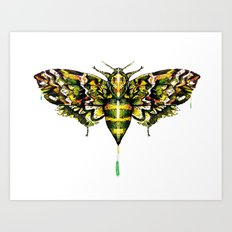 Exhotic Moth Art Print