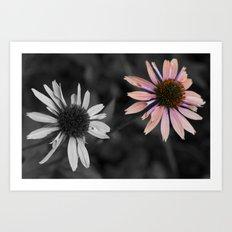 Coneflower Art Print