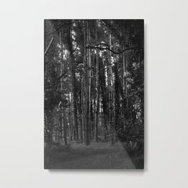 Through The Forest Metal Print