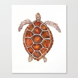 Turtle,Shell, Tortoise, Sealife, Lover, Animal Love, Brown Turtle, Wildlife, Turtle Lover, Turtles Canvas Print