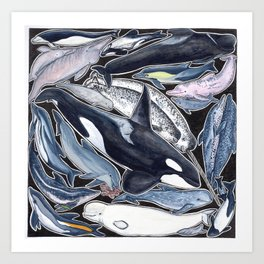 Dolphin, orca, beluga, narwhal & cie Art Print