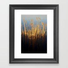 Water Reeds Framed Art Print