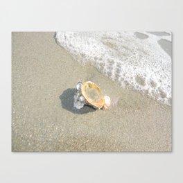 Washed Up Seashell. Canvas Print