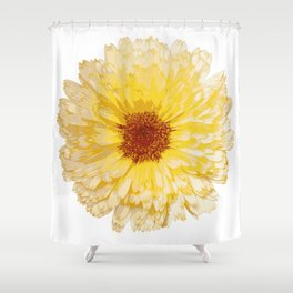 Beautiful Yellow Marigold Vector Isolated Shower Curtain