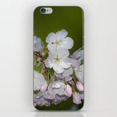 Saratoga Cherry Blossoms iPhone Skin