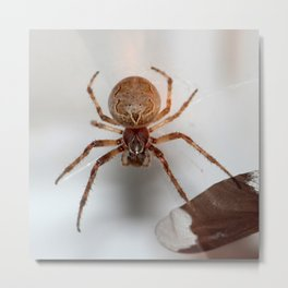 Spider on my garage !! Metal Print
