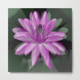 Water Lily.... Metal Print
