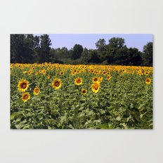 Field of Sunflowers Color Photography Canvas Print