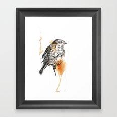 Stonechat Framed Art Print