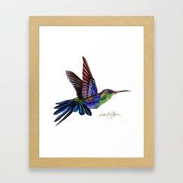 Purple Hummingbird Framed Art Print