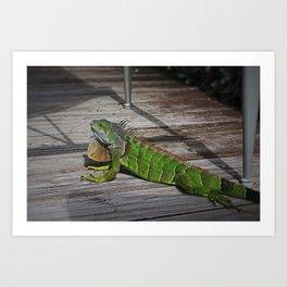 Cayman Iguana I Art Print