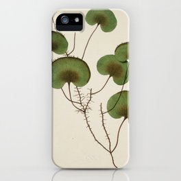 Kidney Fern iPhone Case