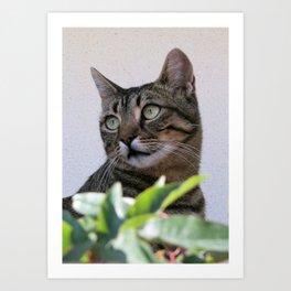 Tabby Cat Sitting In The Shade Behind Passiflora Vine Art Print