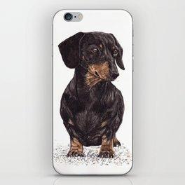 Dog-Dachshund iPhone Skin