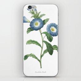HIGHEST QUALITY botanical poster of Dwarf morning-glory iPhone Skin