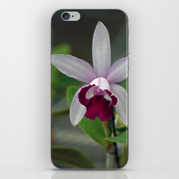 Cattleya Orchid (The Corsage Orchid) iPhone Skin