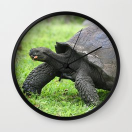 Galapagos Giant Tortoise Wall Clock