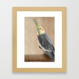 Spike 5 Framed Art Print