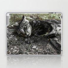 Wild cat Laptop & iPad Skin