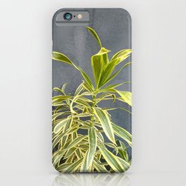 Dracaena Reflexa Plant, Tropical Leaves, Nature Botanical iPhone Case