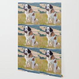 St Bernard dog Wallpaper